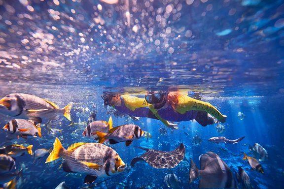 أسعار باقات الغوص في أتلانتس دبي