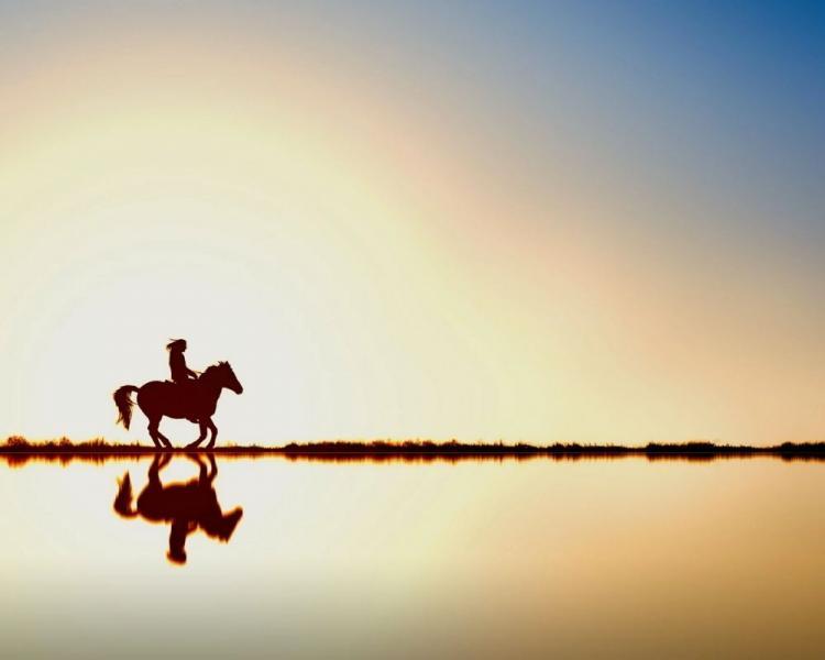 أماكن وأسعار ركوب الخيل في دبي